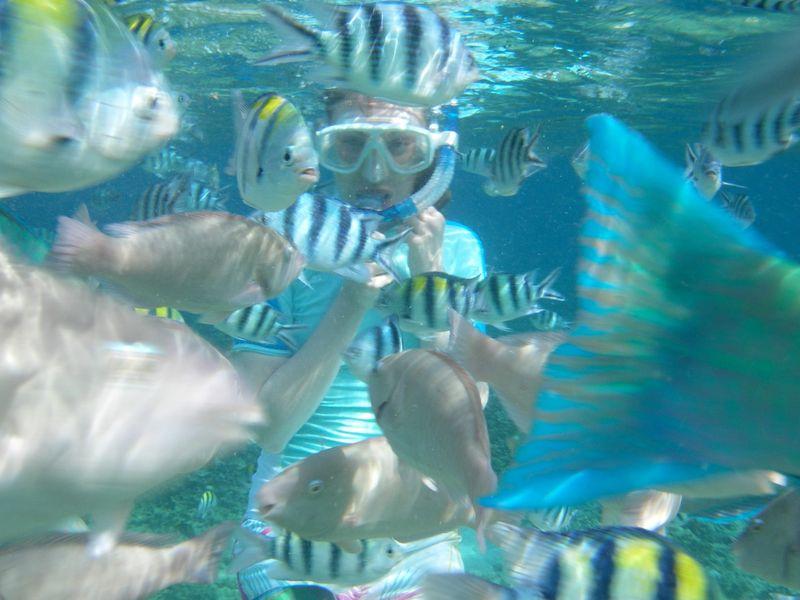 Fish Food 001
